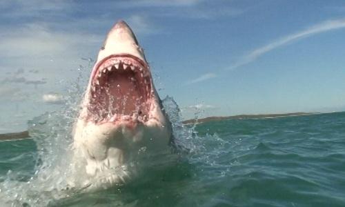 shark-cage5