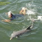 Dolphin-Research