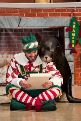 Auch die Seelöwen Clyde und Seamore in SeaWorld Orlando sind in Weihnachtsstimmung ©Sea World Parks&Entertainment