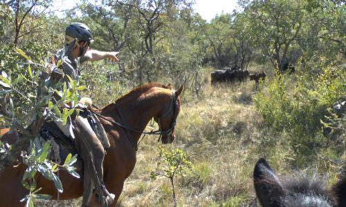 Mit dem Pferd Mittendrin