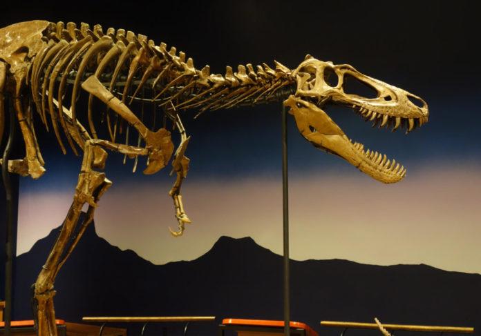 Dinosaurier Museum Köln